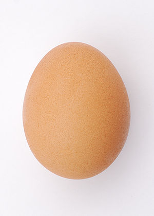 A chicken egg (Gallus gallus domesticus)