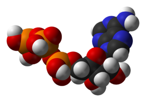 Structure of adenosine triphosphate, a central...